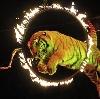 Цирки в Михайлове