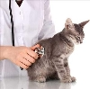 Ветеринарные клиники в Михайлове